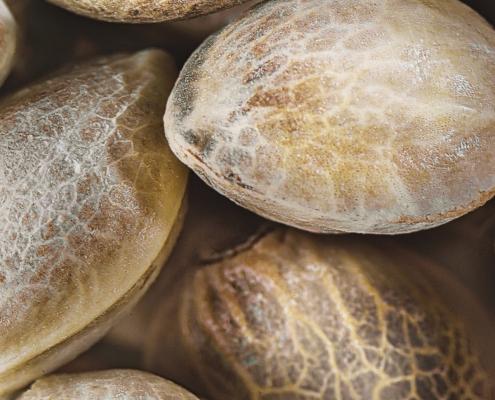 Dinafem Cannabis Seeds